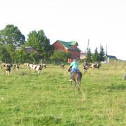 Ков-бой и ков-герла