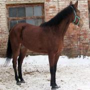 Зима 2009