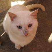 Критские коты. Коты пляжные, вокругресторанные