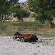 Melanouri horse farm. Поход в Odigitrias Monastery, Central South Crete