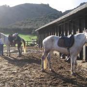 Прокат лошадей Зорайда (Zoraida horse riding). Конюшня