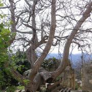 Монастырь св. Георгия (Karydi or Agios Georgios Monastery, Apokoronas).
