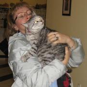 Критские коты. Кошь домашняя