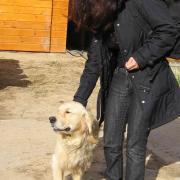 Солнечная собака на солнышке
